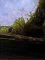 Скелі МоДРу - очиток.jpg
