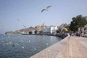 رفتار مرغان دریایی نوروزی یا یاعو در کشور عمان، شهر مسقط، ساحل دریای عمان - عکس مصطفی معراجی 21.jpg