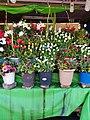 محل لبيع الأزهار و الورود بشارع الحبيب بورقيبة بالعاصمة .jpg