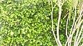 نور الأخضر رمز البيئة.jpg