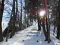 三本松緑地 Sanbon-matsu Park - panoramio.jpg