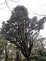 兼六園 - panoramio (33).jpg