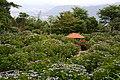 大聖寺 - panoramio.jpg