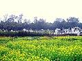 婺源映像(Wuyuan)-1 - panoramio.jpg
