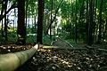 旧小坂家住宅 - panoramio (7).jpg