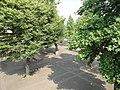 東京外国語大学 - panoramio (32).jpg