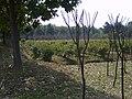 竹叶海公园 - panoramio.jpg