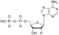 脱氧腺苷二磷酸分子式.png