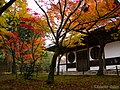 錦秋の宝福寺 (Hofuku-ji Temple in autumn) 21 Nov, 2014 - panoramio.jpg