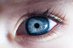 01042013 - Baby eye (8613072602)