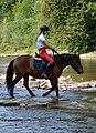 02018 0532 Abschied vom Sommer, Reiten auf den Huzulen Pferden in Rudawka am Wisłok.jpg