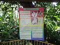 05704jfMidyear Orchid Plants Shows Quezon Cityfvf 37.JPG