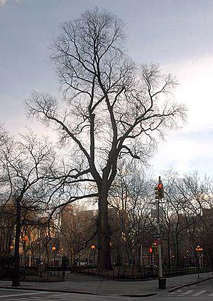 Hangman's Elm - Hangman's Elm