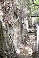 150914 Banias antiques mountain river natural view trees waterfall(4).jpg