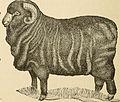 1881 sheep sketch.jpg