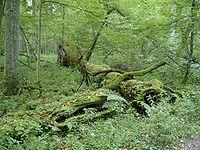 2005-09 Białowieski Park Narodowy 2.jpg