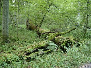 Coarse woody debris fallen dead trees and the remains of large branches on the ground in forests