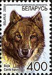 2008. Stamp of Belarus 10-2008-06-10-volk.jpg