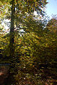 2009-10-herbst-by-RalfR-13.jpg