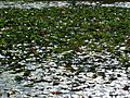 20090817 Eriksberg, Wildpark, 14.JPG