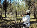 2010. Forest entomologist Lia Spiegel, Blue Mountains Forest Insect and Disease Service Center, photographing pine butterfly defoliation. Eastern Oregon. (37434961336).jpg