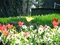 2011, Parcul Carol, flori.jpg