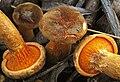 2012-01-28 Hygrophoropsis aurantiaca var. rufa D.A. Reid 197125 crop.jpg