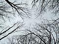 2013-02-03 16-34-05-arbres.jpg