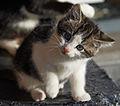 20131203 kitten B.jpg