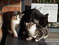 20131203 kittens A.jpg