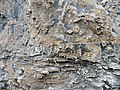 2015.06.06 14.07.40 DSCN2466 - Flickr - andrey zharkikh.jpg