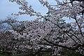 20160403 Himeji-Castle 3277 (26732319222).jpg