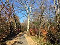 2017-11-24 14 11 28 View along a walking path during late autumn in the Franklin Farm section of Oak Hill, Fairfax County, Virginia.jpg