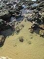 2018-01-17 Tide pools on Praia da Oura (1).JPG