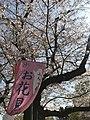 2019 Sakura Festival in Ueno Park.jpg
