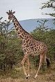 202008- Porini Mara Trip-194 (50231641823).jpg