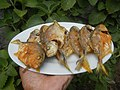 3412Fried fish in the Philippines 12.jpg