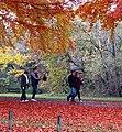 3561 Beech Trees, The Promenade (8176297964).jpg