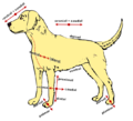 662px-Anatomical-directions.png