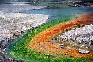 Thermus aquaticus - Hot springs with algae and bacteria in Yellowstone National Park