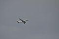 AFR F-GRHF A319 LFBO 28-04-14.jpg
