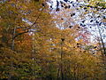 AUT 2804 ForestWander.JPG