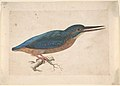 A Kingfisher on a Branch MET DP807375.jpg