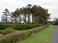 A coppice of Fir Trees on the Loughgall Road, Armagh - geograph.org.uk - 580994.jpg