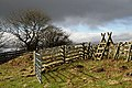 A stile on Selkirk Common - geograph.org.uk - 1174628.jpg