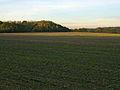 A walk through Twyford Wood, No 3a - geograph.org.uk - 272041.jpg