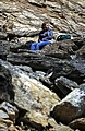 A woman rests on the rocks along the Mount Healy Trail on Tuesday, June 13, 2017. (a5ec83f0-95e0-4e20-b835-ebaccb457d39).JPG