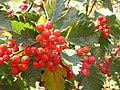 Ab plant 2245.jpg