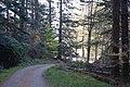 Achnashellach Forest - geograph.org.uk - 167017.jpg