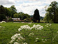 Across meadow to Washdyke Lane, Belton (nr Grantham) - 03.jpg